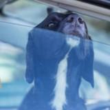 Il laisse son chien dans sa voiture et colle un mot pour que les gens ne s'inquiètent pas. La suite est terrible