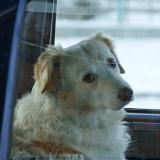 Une policière contraint une femme à rester enfermée dans sa voiture comme son chien