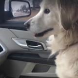 Sauvée, cette chienne a une réaction très touchante qui a fait le tour du monde (Vidéo)