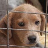 Vol de chien : un trafic en plein essor