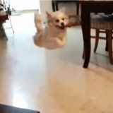 Le chien qui pensait avoir des ailes (Vidéo du jour)