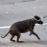 Une inquiétante augmentation des vols de chiens aux Etats-Unis