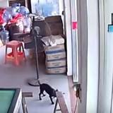 Ce chien a été arrêté par la police pour une raison plutôt amusante (Vidéo)