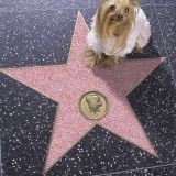 Le Dog Walk of Fame