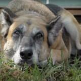 Ils emménagent dans une maison et trouvent un chien dans la cour : le verdict du vétérinaire est cataclysmique