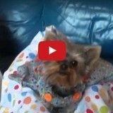 Un chien aboie «joyeux anniversaire» pour la reine d'Angleterre (Vidéo du jour)