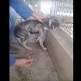 L'émouvante réaction d'un chien maltraité, caressé pour la première fois