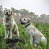 C'est prouvé, les chiens sont capables d'empathie envers leurs congénères