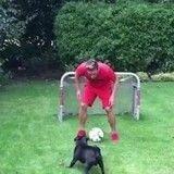Le chien de Mesut Özil, meilleur entraîneur de football au monde ? (Vidéo du jour)