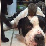 Protecteur, cet adorable chien protège un écureuil des attaques d'un chat ! (Vidéo du jour)