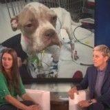 Quand Ellen DeGeneres donne 10000$ à un couple pour sauver leur chien malade