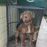 Ils voient un chien enfermé dans une cage à oiseaux, en s'approchant ils sont encore plus en colère