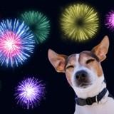 La Réunion : chats et chiens s'enfuient de leur domicile, effrayés par les feux d'artifice