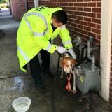 Une chienne errante s'effondre devant la caserne, ce que le vétérinaire annonce choque tout le monde