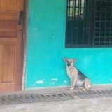 Abandonnée devant son ancienne maison, cette chienne réservait une belle surprise aux sauveteurs