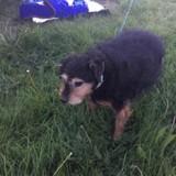 Ils trouvent une chienne dans un champ, dans son sac de croquettes ils découvrent l'impensable