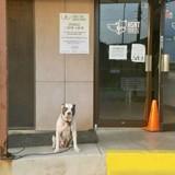 Les employés voient un chien attaché devant le refuge, en regardant la vidéo de surveillance ils sont sans voix