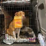 Elle démarre un voyage avec 3 chiens dans la voiture : à l'arrivée, ils sont 17 !