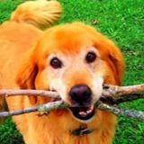 Il perd son chien et ses élèves lui font la plus belle des surprises (Vidéo)