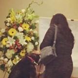 Ils regardent la chienne s'approcher du cercueil de son maître, ce qu'elle fait bouleverse tout le monde