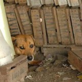 Elle trouve un chien protégeant six chiots, s'approche et découvre qu'il cachait autre chose