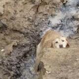 Ce chien perdu refusait de se lever, quand il comprend pourquoi il réalise qu'il y a urgence (Vidéo)