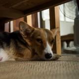 Il aide sa chienne à mettre au monde ses petits et réalise que ce sont des chatons !