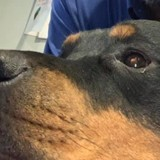 A 4 ans, elle envoie une lettre au paradis pour sa chienne décédée : la réponse qu'elle reçoit laisse sans voix
