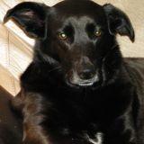 La belle histoire de la chienne Cici, adoptée après 2 ans d'errance