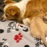 Ses chiots sont morts-nés : une semaine plus tard, un miracle se produit !