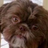 Une femme décède, ses dernières volontés au sujet de son chien font hurler tout le monde