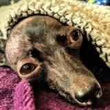 Sauvetage d'un chien prostré sous une voiture : elle soulève la couverture et explose en sanglots