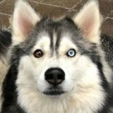 Voilà la chienne la plus amicale au monde (Vidéo du jour)