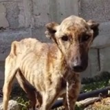 Mourant de faim, ce chien a été sauvé juste à temps. Sa métamorphose fait chaud au coeur