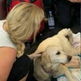 La chienne s'allonge au milieu d'un aéroport et ne bouge plus, la suite donne les larmes aux yeux de tout le monde