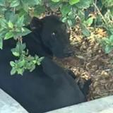 Caché dans un buisson, ce chien a assisté à la pire des scènes