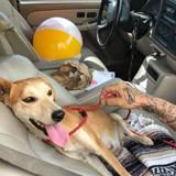 Elle sauve une chienne abandonnée, elle lui dévoile son plus grand secret