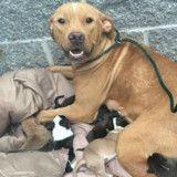 Abandonnée devant un refuge avec ses 10 chiots, cette maman chien a fait l'impensable