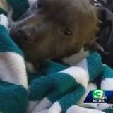 En plein incendie, cette chienne a fait quelque chose qui a bouleversé le monde entier (Vidéo)