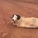 Elle trouve une chienne attachée dans la rue, lorsque le vétérinaire l'examine la terrible vérité est révélée (Vidéo)