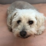 Ils entrent dans la SPA avec leur chien de 14 ans : 5 minutes après, personne n'en croit ses oreilles