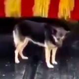 Ce chien se rend tous les jours dans une station de lavage, ce qu'il y fait donne le sourire à tout le monde