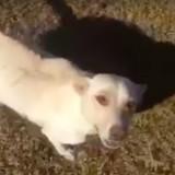 Elle voit une chienne allongée devant une tombe, la suite va la marquer pour toute sa vie