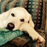 Rebelle, la chienne attend que le vétérinaire quitte la pièce pour prendre sa revanche