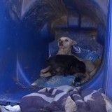 Le sauvetage bouleversant d'une chienne qui élevait son petit dans une poubelle (Vidéo du jour)