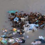 Une chienne traverse une rue inondée pour sauver ses petits