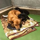 Un chien se glisse hors de sa cage pour aller réconforter des chiots terrifiés et en pleurs