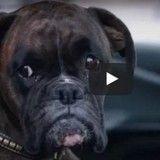 Un chien gare seul une voiture sous le regard médusé de passants (Vidéo du jour)