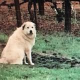 Il trouve un chien perdu, puis regarde le panneau à côté et explose de rire