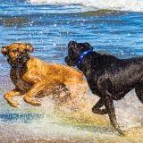 Les 20 plus belles photos de chiens à la plage !